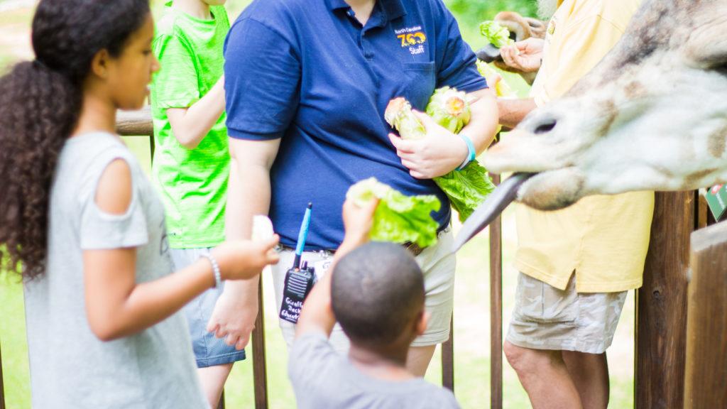 3 Reasons Kids Love the Zoo
